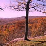 The Alto Pass overlook and Shawnee Forest south of Carbondale, IL is worth a fall trip