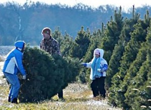 Start a family tradition of finding and cutting the perferct tree
