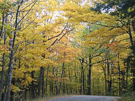 A state park in Door County glistens with gold