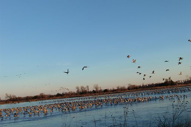 Spring crane migration on the Central Platte River
