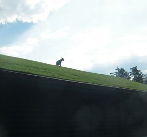 Eat at Al Johnson's or park there to see the goats on top of the restaurant.