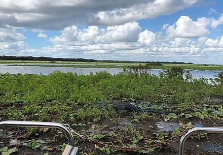 Sp;otted a couple of alligators while doing a Boggy Creek Airboat ride in Kissimmee. (J Jacobs photo